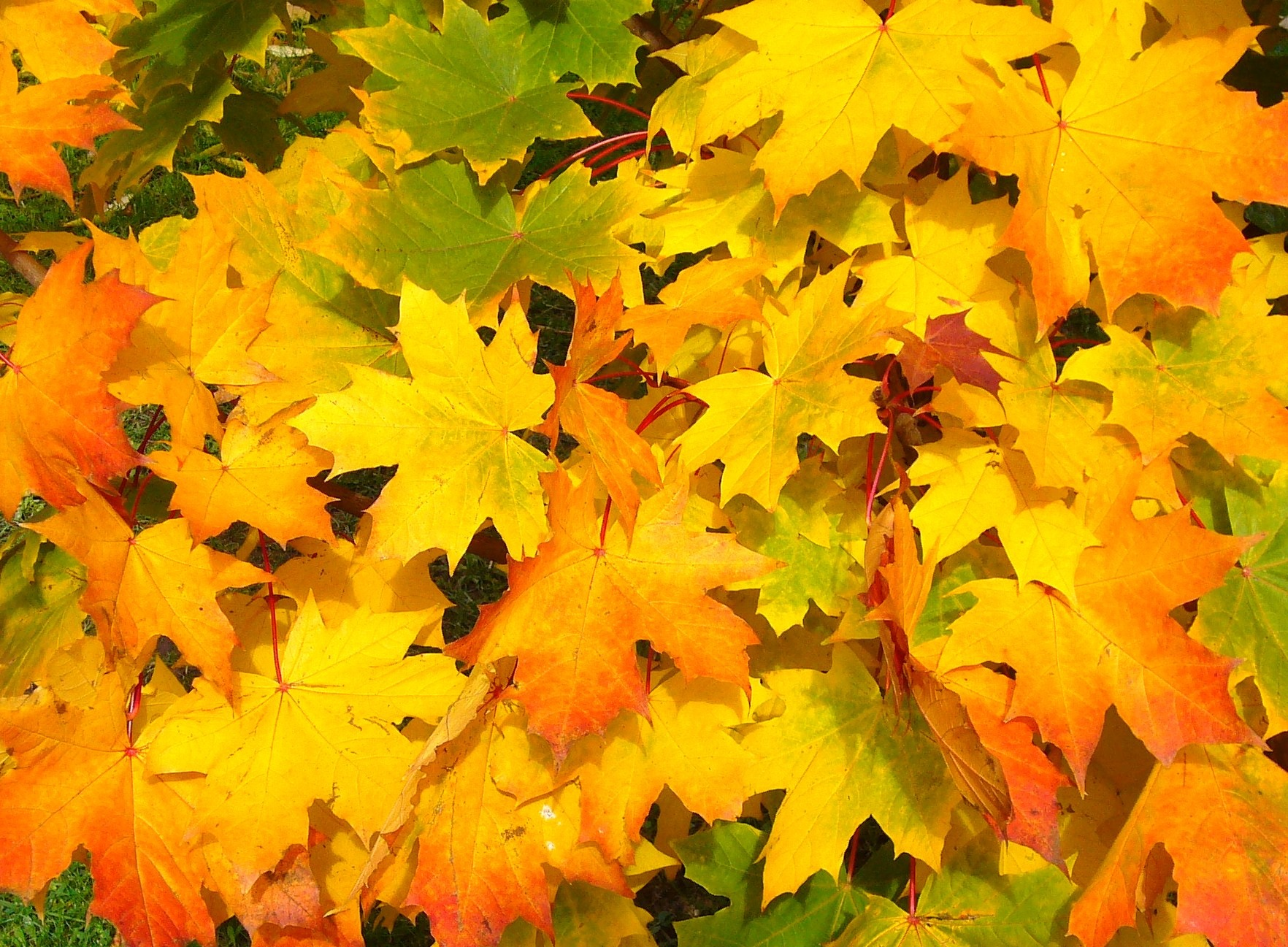 Orange and brown leaves autumn fall colorful yellow