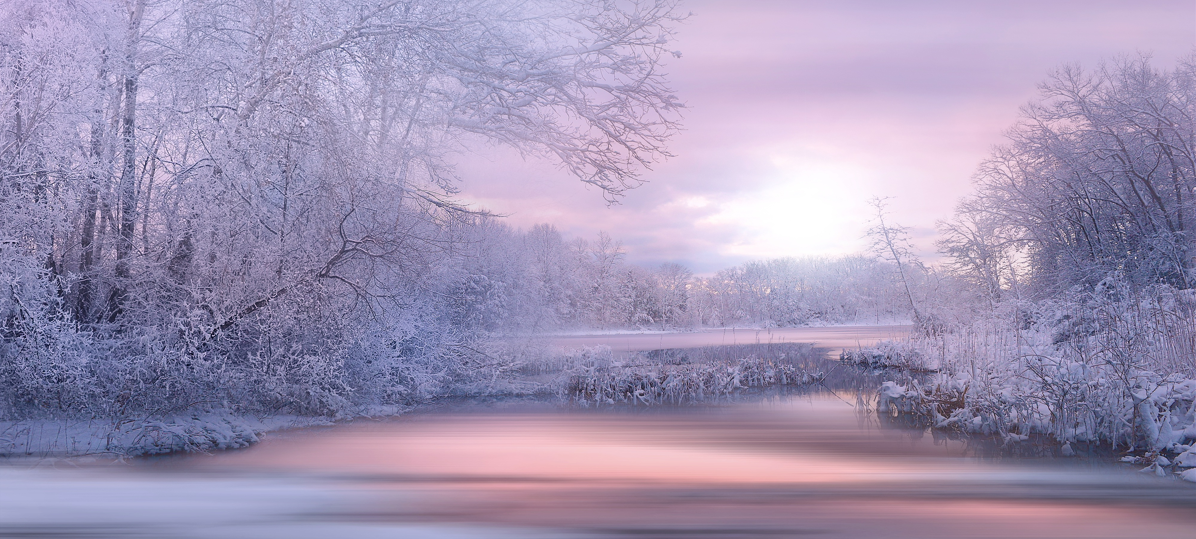 Lavender nature landscape winter