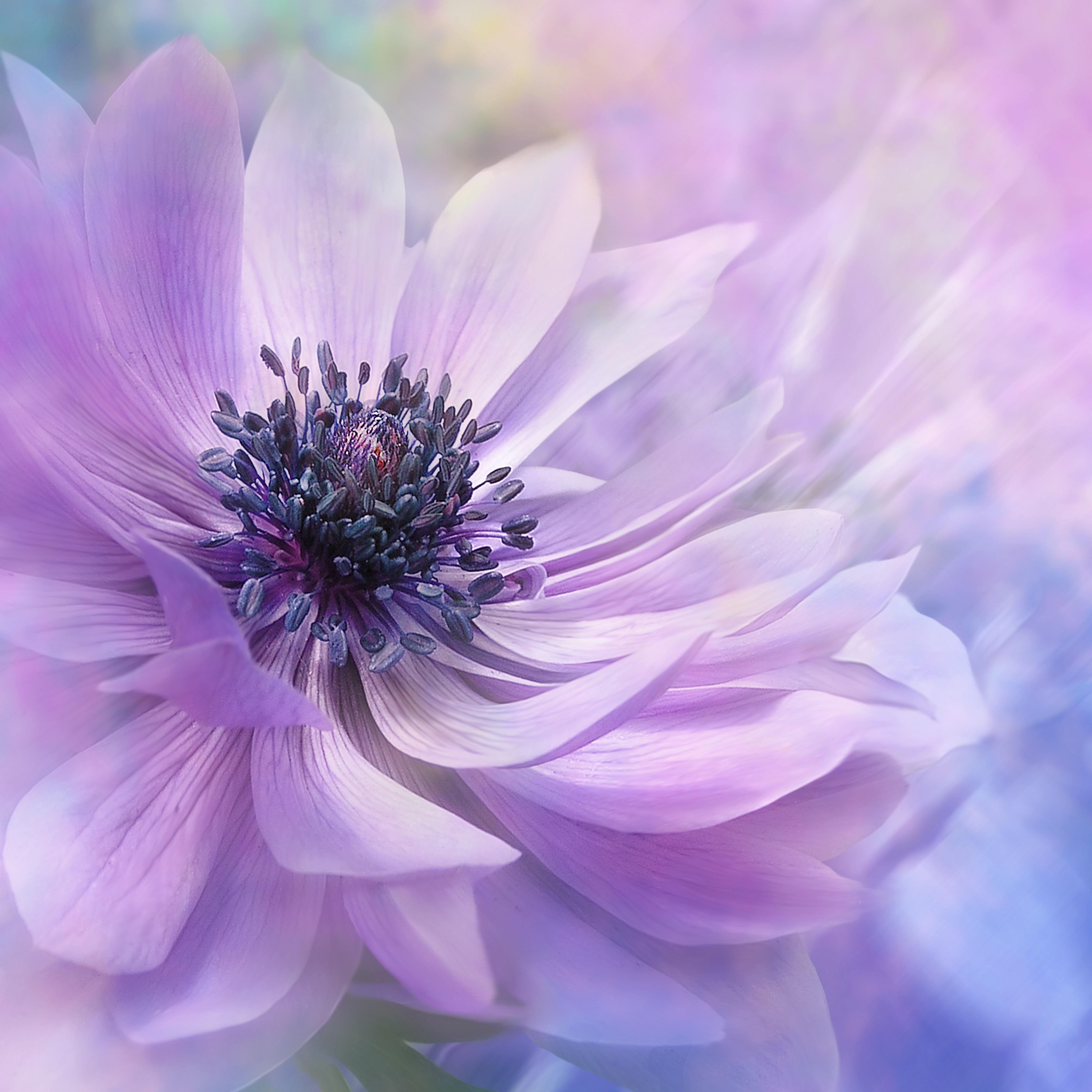 Purple nature landscape flower blossom