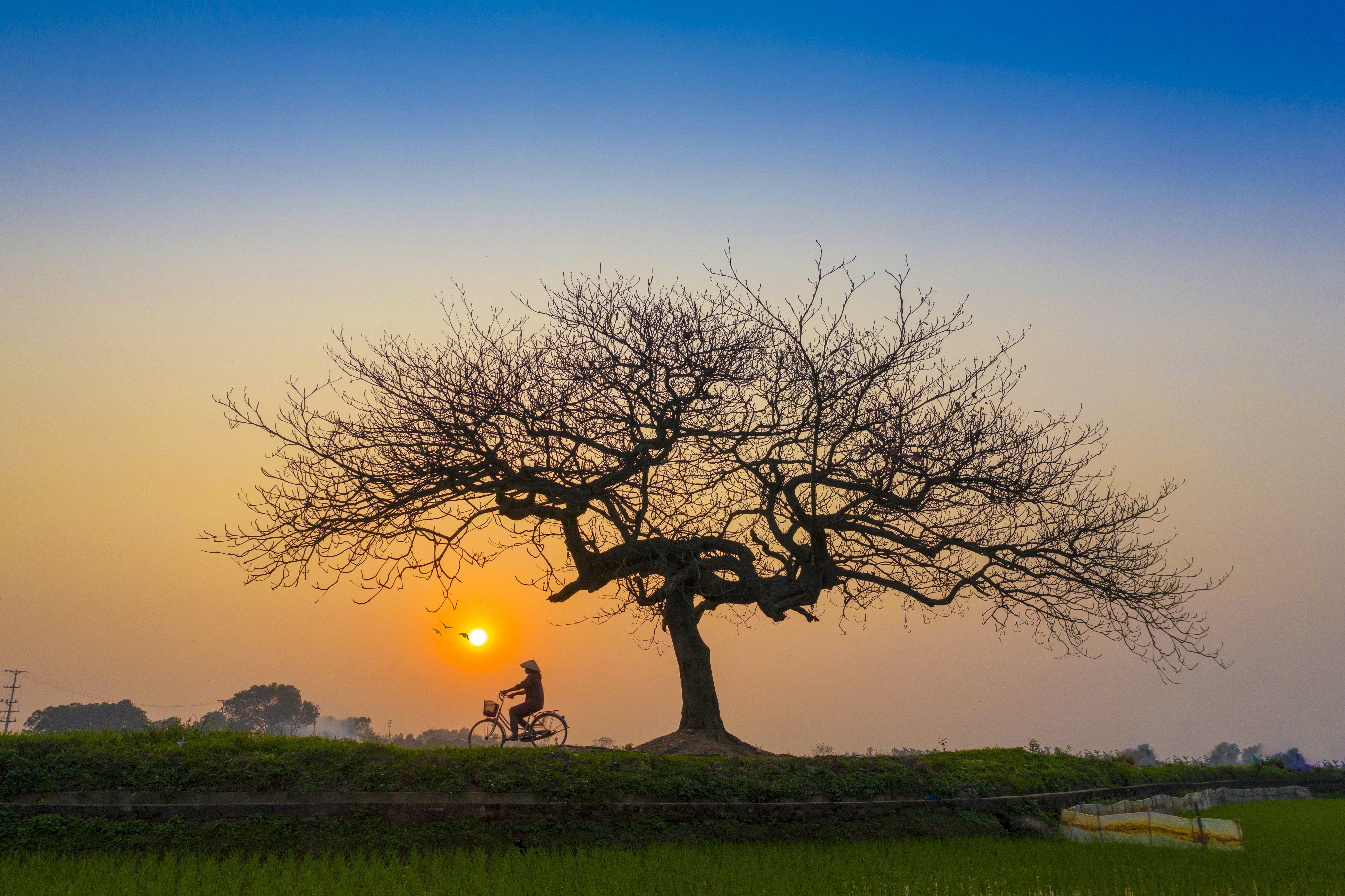 Color Palette – sunset afternoon bicycle lonely –  #b09d89, #203f45, #976a2f, #503c28, #597aa3 – Easily Suede color, Bay Isle Pointe color, Woodgrain color, Bonanza color, Montreux Blue color