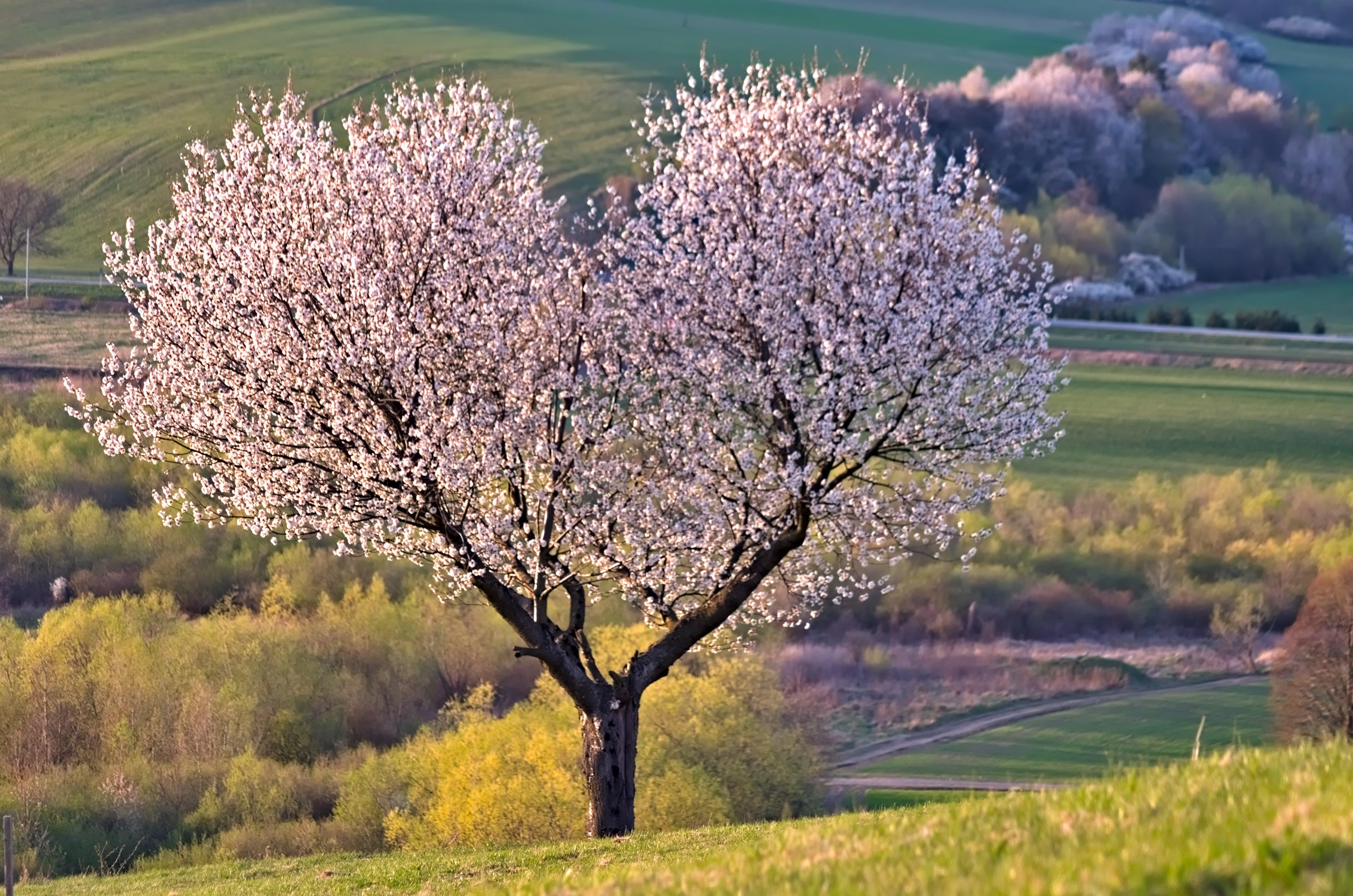Color Palette – tree nature heart cherry flowers – #aab8bd, #884a47, #d58945, #749998, #b18284 – Lake Placid color, Rudraksha Beads color, Cognac color, Undertow color, Rose Dawn color